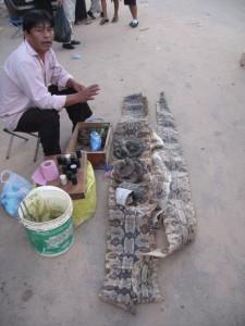 Really long snake skin - note smaller snake coiled at mans feet